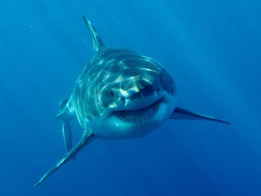 635712730459368370-XXX-Discovery-Sharkweek2015-dcb